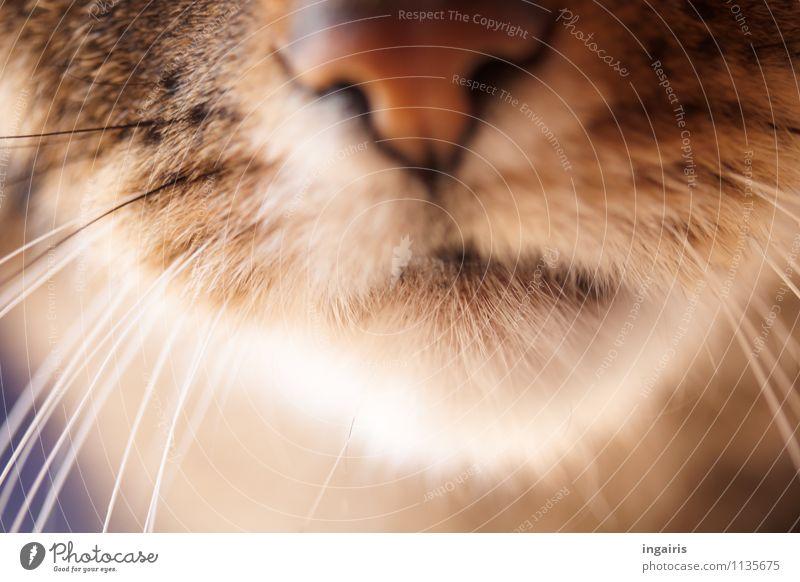 Im sechzehnten Jahr Katze weiß Tier Wärme natürlich braun Freundschaft beobachten weich Freundlichkeit Nase Neugier Fell Vertrauen Haustier Tiergesicht