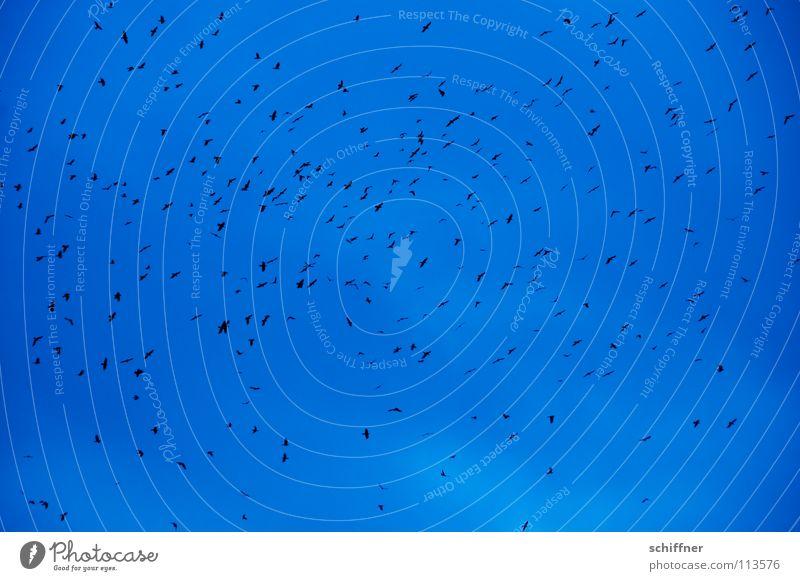 Gaußsche Normalverteilung II Himmel blau Wolken dunkel Traurigkeit Regen Vogel fliegen Luftverkehr mehrere viele trüb Schwarm schlechtes Wetter Rabenvögel Krähe