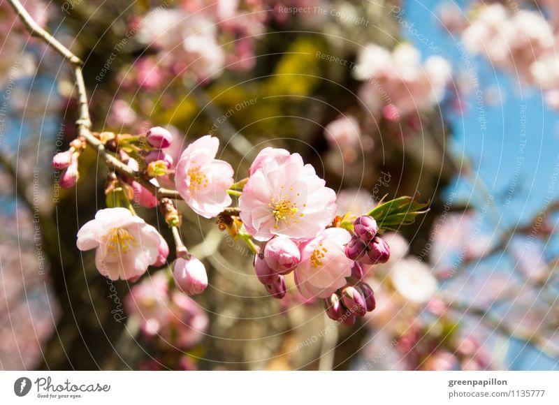 Frühlingsbrise Himmel Natur Pflanze Baum Landschaft Umwelt Liebe Wiese Blüte Garten rosa Park Wetter Klima Schönes Wetter
