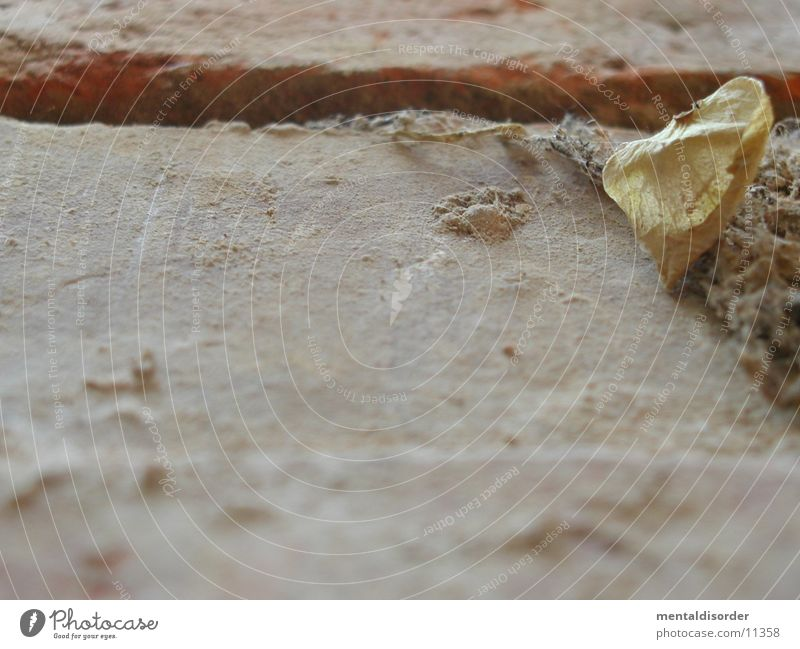 Struktur alt Blatt Stein Mauer Hintergrundbild liegen Teile u. Stücke Staub zerbrechlich Fuge getrocknet Fototechnik