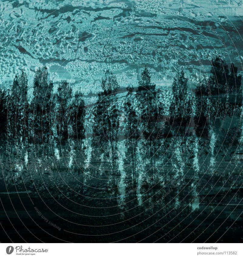 kondenswasserableitung Ferien & Urlaub & Reisen Wald kondensieren Baum Fenster Eisenbahn träumen feucht Kondenswasser Holzmehl Glasscheibe Wasser condensation
