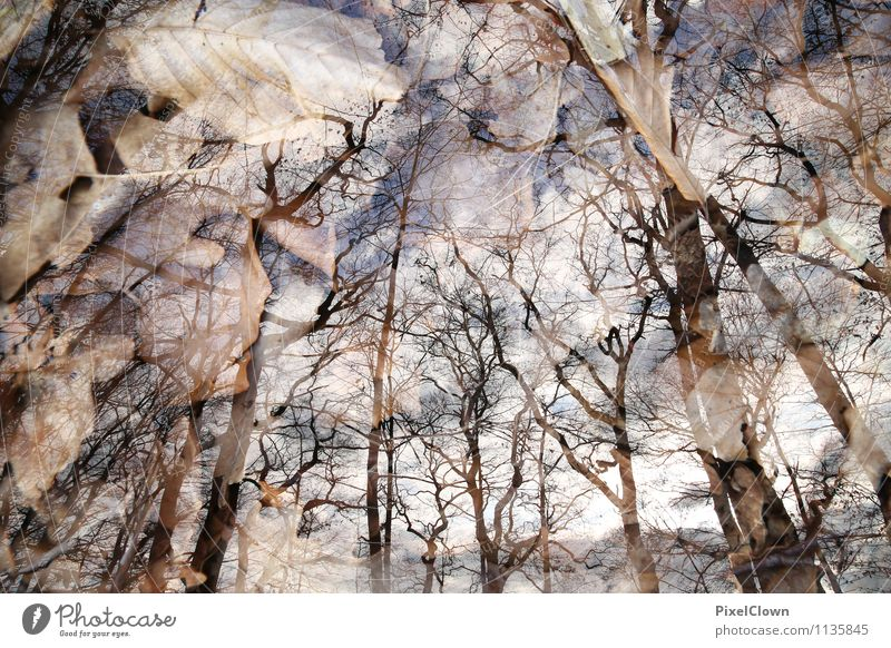 mystisch Himmel Natur Ferien & Urlaub & Reisen Pflanze Baum Einsamkeit Landschaft Tier dunkel Wald Traurigkeit Gefühle Herbst Stil Holz außergewöhnlich