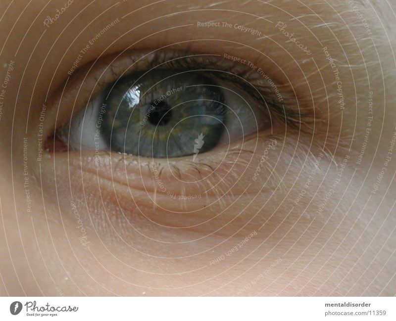 Auge [Kind] grün blau Haare & Frisuren grau Falte Wimpern Augenbraue Linse Brennpunkt Regenbogenhaut Verständnis begreifen