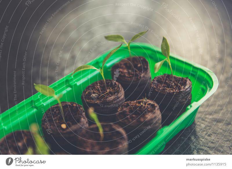 tomaten aufzucht urban gardening Stadt Gesunde Ernährung Umwelt Leben Gesundheit Garten Lifestyle Freizeit & Hobby Wachstum Häusliches Leben Blühend Fitness Gemüse Bioprodukte harmonisch Diät