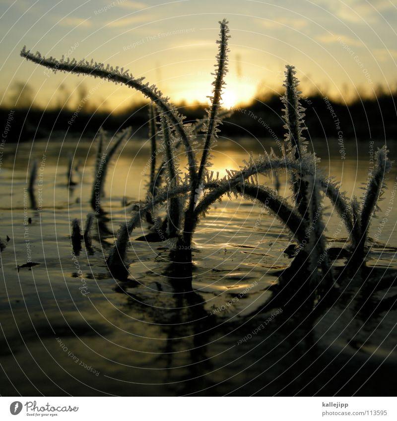 frosty Pfütze Eiskristall Schneekönigin Märchen zerbrechlich Vergänglichkeit Grad Celsius Winter kalt Glätte Rutschgefahr Gras Schnellzug Jahreszeiten