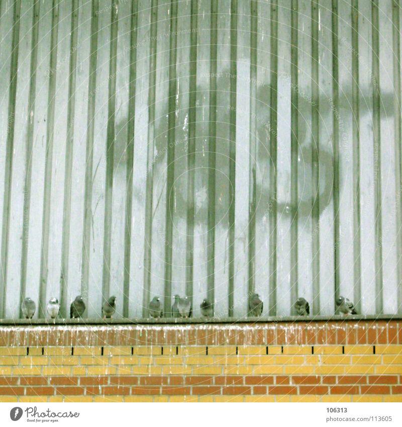 MAKE SOME CASH WITH TAUBENTRASH weiß rot Tier gelb Wand Spielen Mauer Stein Metall Luft Freundschaft Vogel orange offen fliegen Fassade