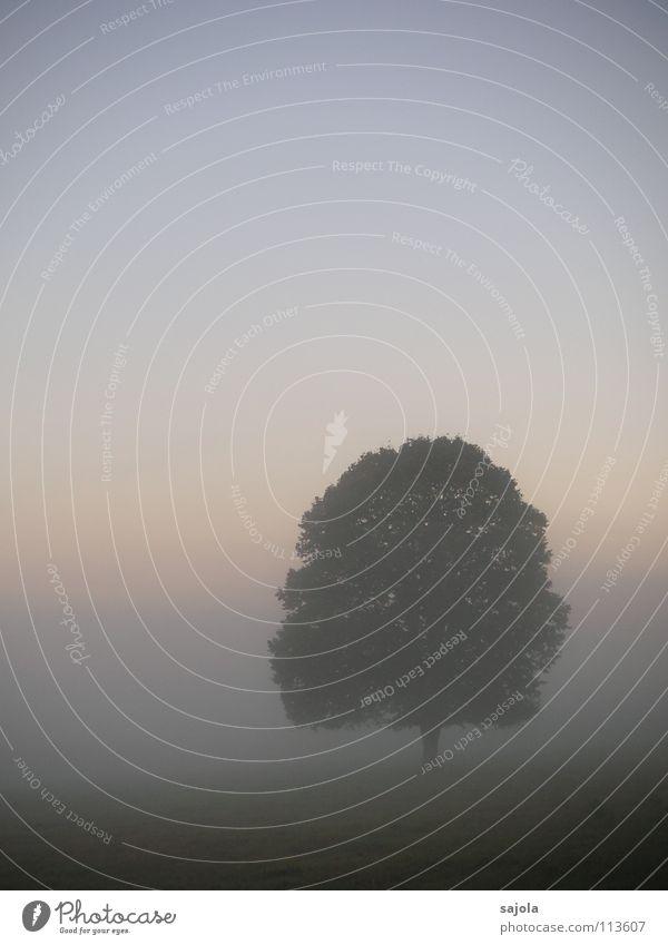 wenn der tag erwacht harmonisch ruhig Natur Landschaft Pflanze Himmel Herbst Nebel Baum weich Stimmung Traurigkeit Trauer Sehnsucht Einsamkeit ästhetisch