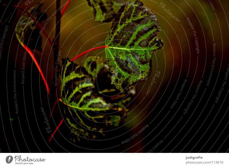 Herbst Blatt dunkel grün gelb rot Umwelt Pflanze Baum Sträucher Wiese Wachstum Farbe Natur