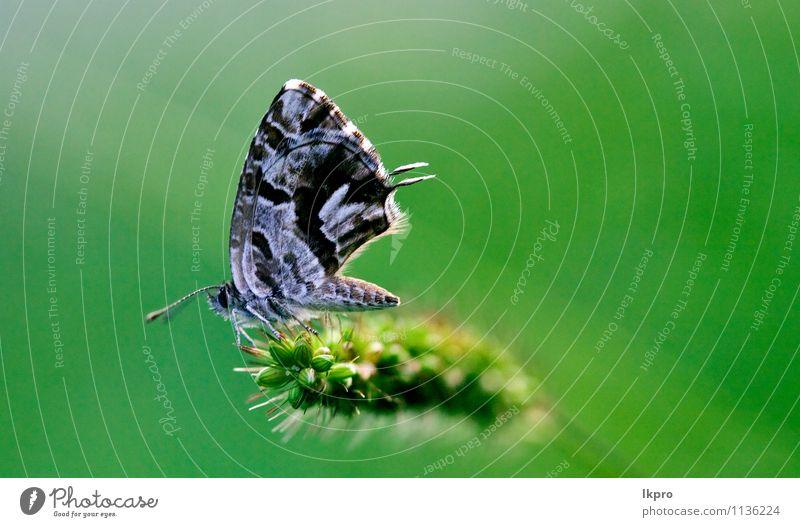 auf einem grünen Blatt im Busch. Sommer Garten Natur Pflanze Blume Weiche Fluggerät Behaarung Schmetterling Pfote Linie Tropfen Blühend wild blau braun grau