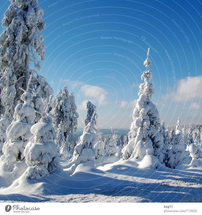 Märchenhaft IV Himmel blau schön weiß Baum Wolken Freude Winter Wald kalt Graffiti Schnee Stimmung Beginn Ziel Hütte