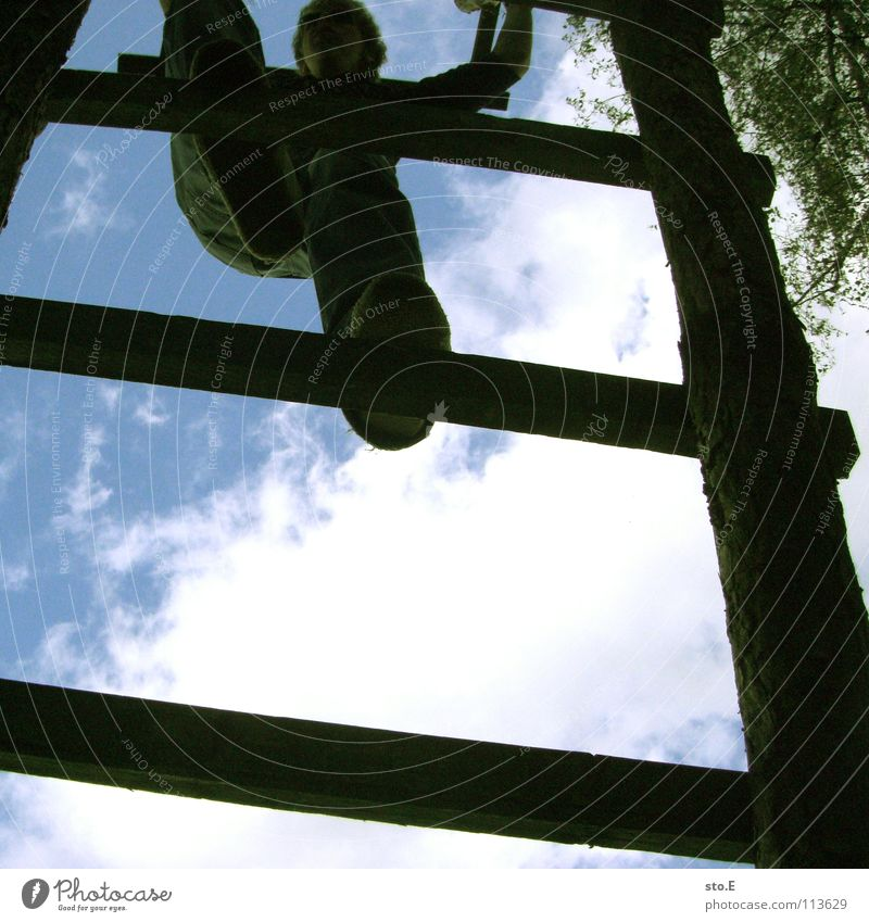 wetterfrosch Kerl steigend Klettern aufsteigen Holz Hochsitz Jäger Halt festhalten Wolken schlechtes Wetter Baum Baumkrone Blatt Sommer Osten Jugendliche Himmel