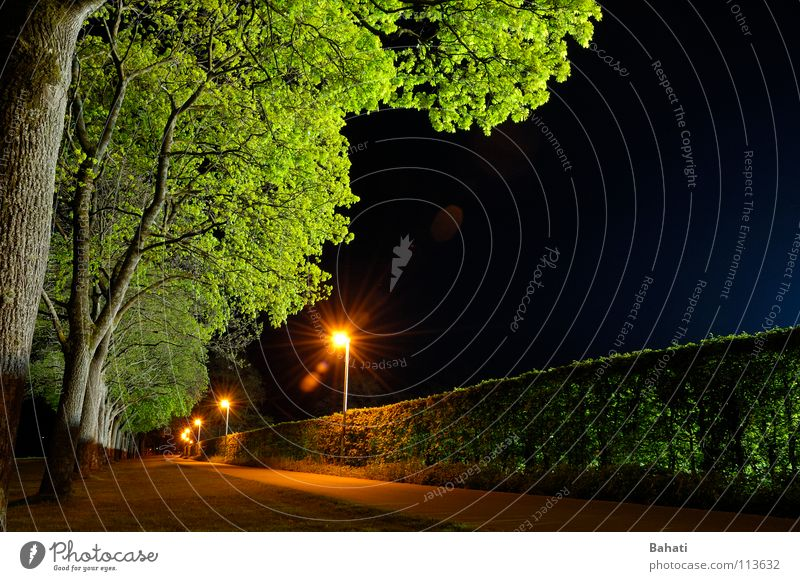 Baumleuchten Baum grün blau Lampe warten leer Laterne Fahrradweg
