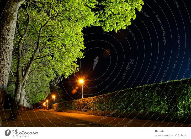 Baumleuchten Fahrradweg Nacht Lampe grün Laterne Langzeitbelichtung Licht leer blau warten