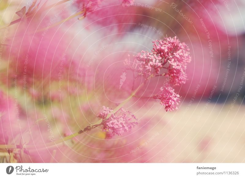brise Umwelt Natur Pflanze Frühling Schönes Wetter Blume Garten Park Wiese Duft schön braun grün rosa rot sanft Brise Allauch Notre-Dame du Château Unschärfe
