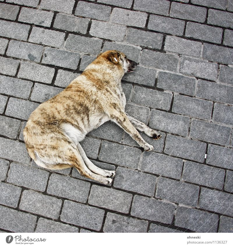 Hundeleben Tier Haustier 1 liegen Pause Wellness Farbfoto Außenaufnahme Strukturen & Formen Textfreiraum rechts Textfreiraum oben Textfreiraum unten Tag