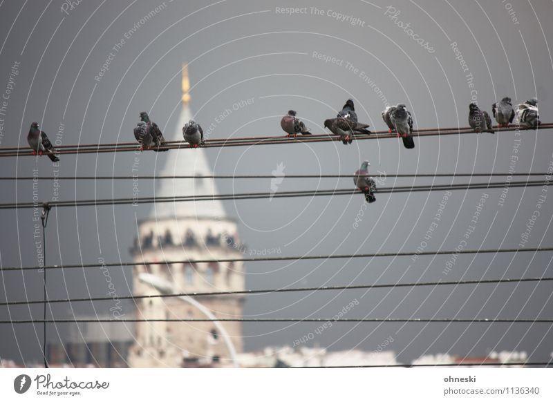 Sightseeing Kabel Drahtseil Gewitterwolken Istanbul Sehenswürdigkeit Wahrzeichen Galata-Turm Tier Vogel Taube Tiergruppe sitzen warten Farbfoto Gedeckte Farben