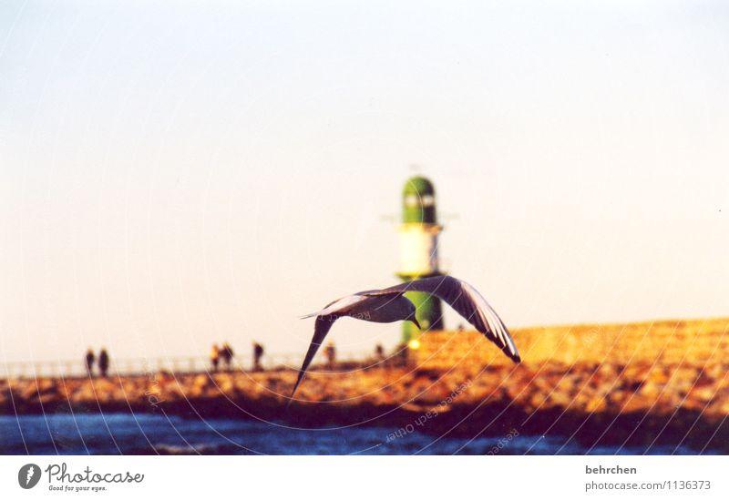 grenzenlos Himmel schön Sommer Meer ruhig Tier Frühling Herbst Küste Freiheit außergewöhnlich fliegen Vogel Kraft Wellen Feder