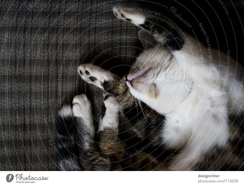 kraulen, los! Haare & Frisuren Katze süß nah Fell gemütlich Säugetier Sessel bequem Zärtlichkeiten Besitz besitzen Streicheln Kraulen räkeln Untergebener