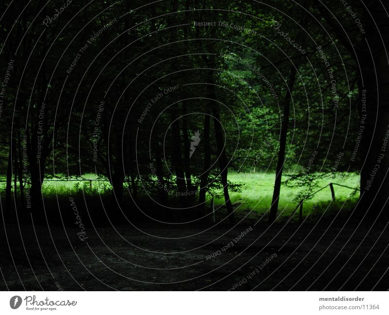 Waldspaziergang III Baum Wiese Gras grün dunkel Waldlichtung Sträucher Licht Natur Blick wenige Ast Wege & Pfade hell ins