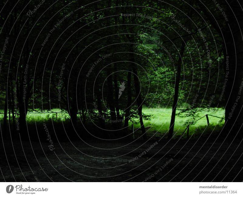 Waldspaziergang III Natur Baum grün dunkel Wiese Gras Wege & Pfade hell Sträucher Ast wenige Waldlichtung