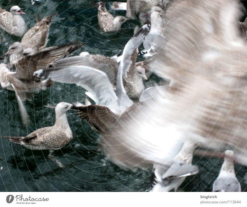 Möwen I Gedeckte Farben Außenaufnahme Menschenleer Tag Bewegungsunschärfe Vogelperspektive Tier Wasser Wildtier Flügel Tiergruppe Schwarm fliegen