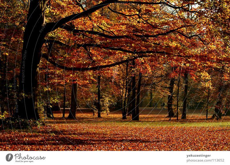 Englischer Garten Baum Blatt Herbst Park Aktien Ahorn Eiche Birke Buche