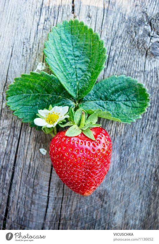 Frische Erdbeere mit Blätter und Blüten Natur Pflanze schön Sommer Blatt Gesunde Ernährung Leben Stil Garten Lebensmittel Lifestyle Frucht Design Duft