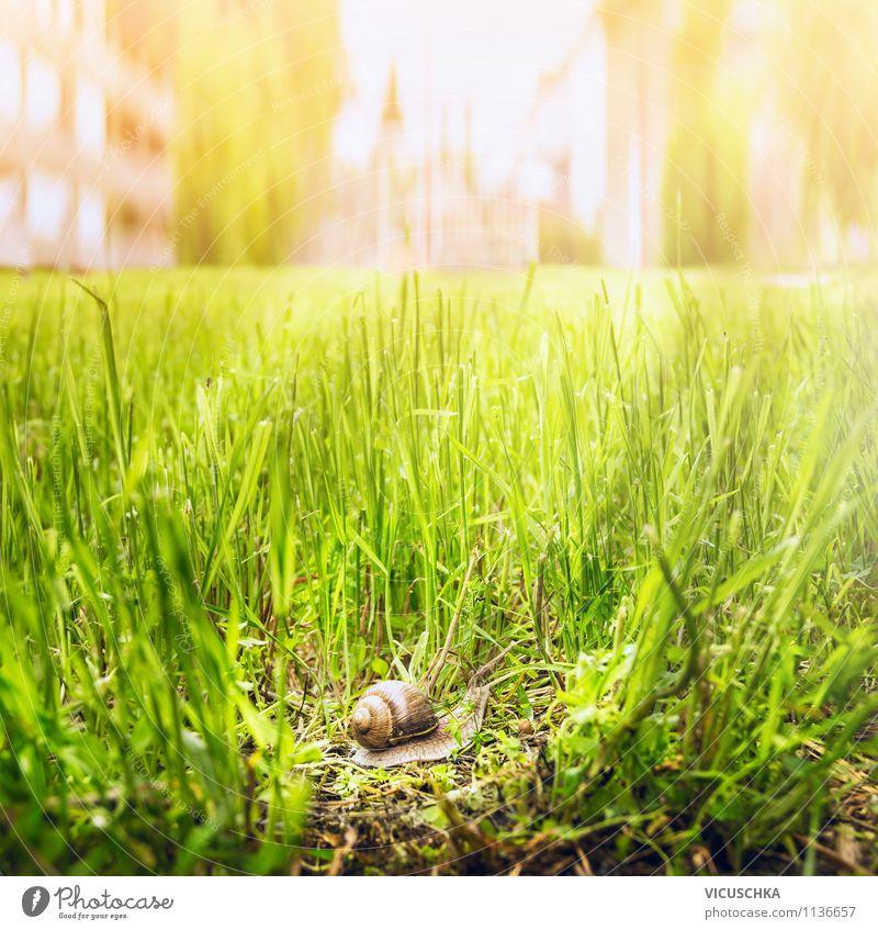 Schnecke in der Stadt unterwegs Natur Ferien & Urlaub & Reisen grün Sommer Tier Umwelt Leben Frühling Herbst Gras Hintergrundbild Garten Lifestyle Stimmung
