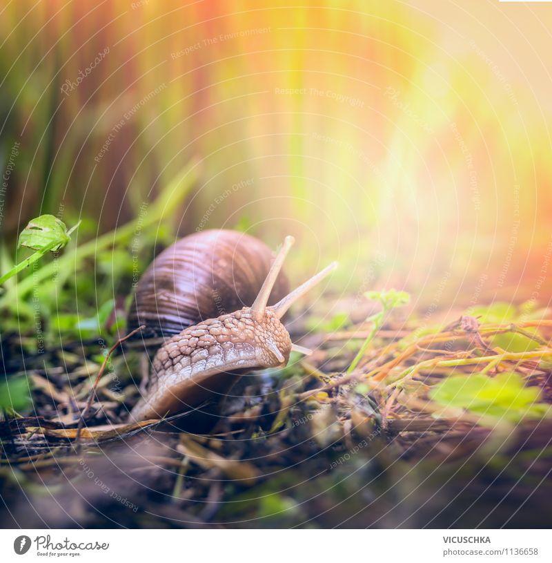 Garten Schnecke unterwegs Natur Pflanze schön Sommer Tier Umwelt Leben Herbst Frühling Wiese Gras Hintergrundbild Lifestyle Park Schönes Wetter