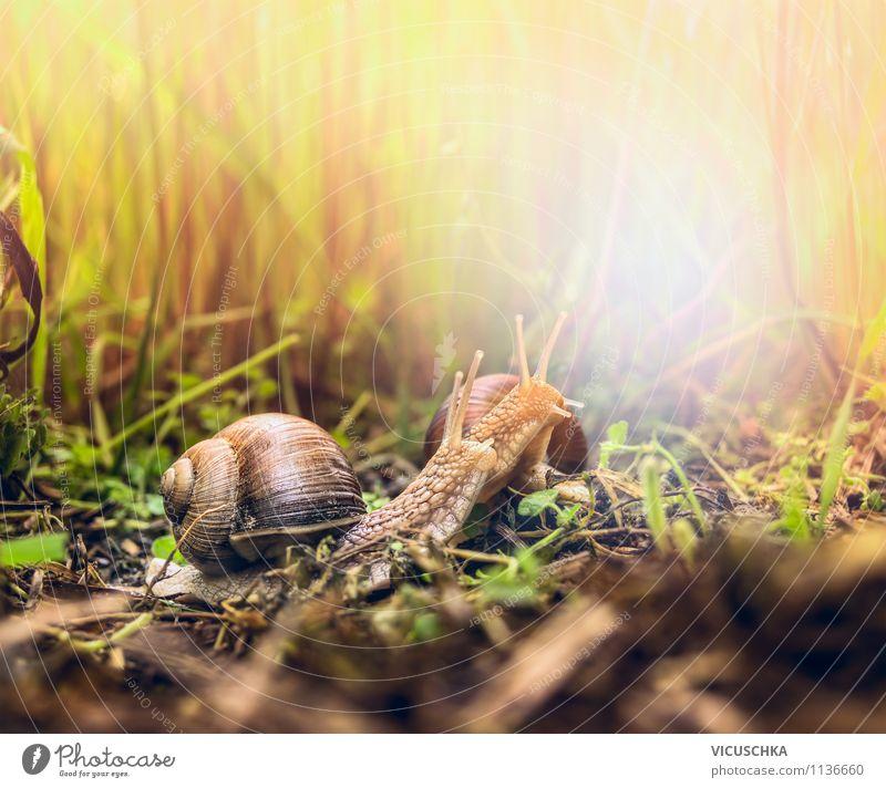 Zwei Schnecken Natur Pflanze Sommer Tier Umwelt gelb Frühling Liebe Herbst Gras Stil Hintergrundbild Garten Design Nebel Tierpaar