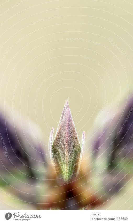 Gut versteckt Natur Pflanze Einsamkeit Blatt Frühling natürlich Zufriedenheit Wachstum authentisch Sträucher Erfolg Beginn einfach Hoffnung verstecken