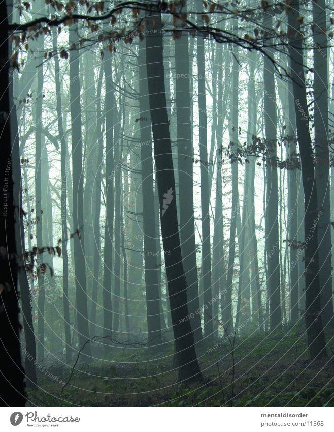 ein Morgen im Wald Natur Baum grün Blatt dunkel Tod Gras Regen Angst Nebel nass Ende fallen Ast feucht
