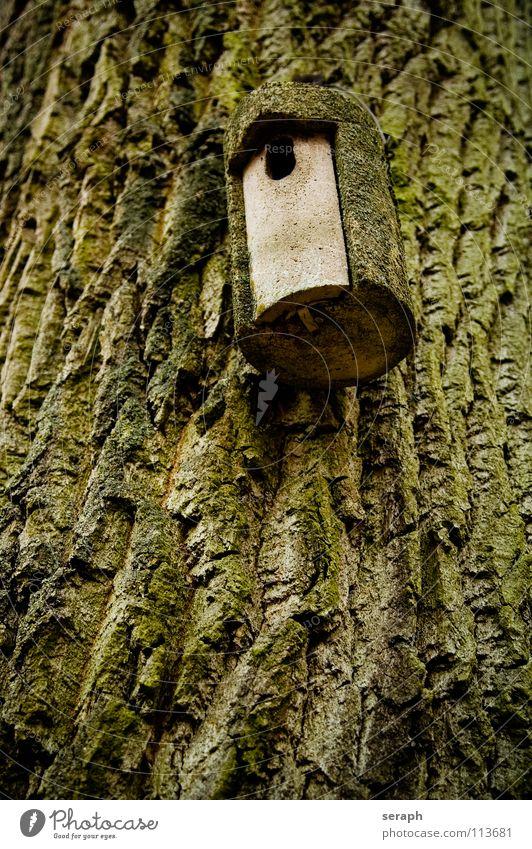 Vogelhaus Baumstamm Baumrinde Wald Ornithologie Nistkasten Haus Futterhäuschen aufhängen Nest Brutpflege Loch Versteck ausgeflogen nisten Nachkommen