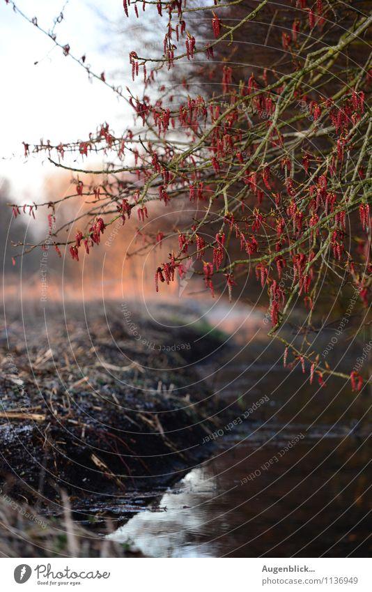 auf der Lauer... Natur schön ruhig Frühling natürlich Freiheit Freizeit & Hobby Zufriedenheit Nebel frisch Schönes Wetter Duft
