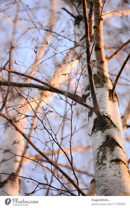 die erste Frühlingswärme... Natur Ferien & Urlaub & Reisen Baum ruhig Freiheit Wolkenloser Himmel