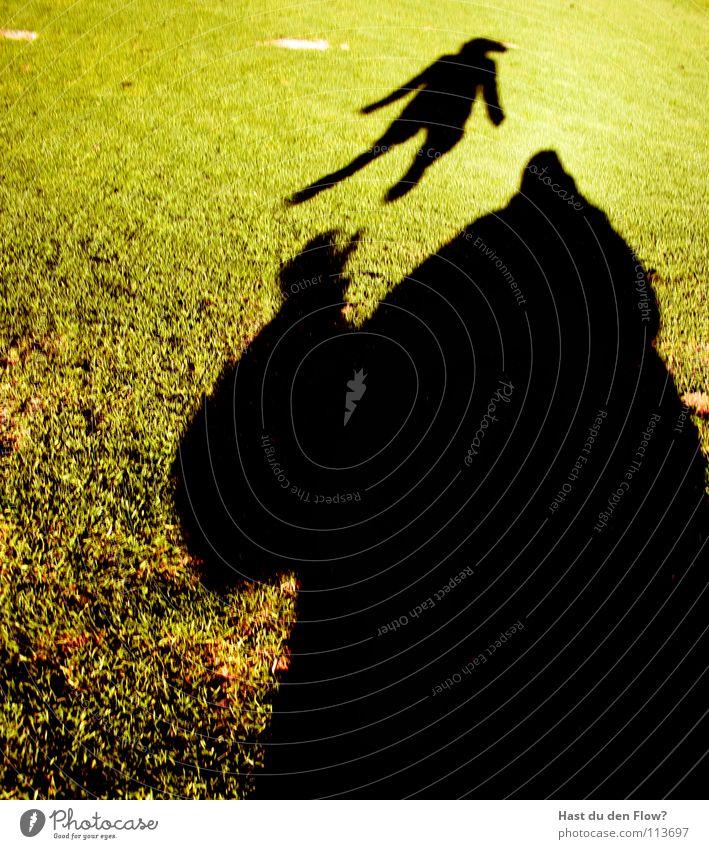 spielplatz Frau grün schön Sonne Winter Wiese kalt Spielen Freiheit Gras Haare & Frisuren Freizeit & Hobby Wind Angst laufen frei