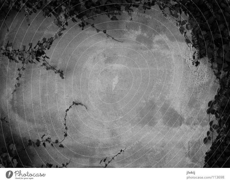 Efeu Ranke Pflanze Wachstum Mauer Wand Friedhof Grab Putz Beton dunkel trüb schwarz weiß grau Grabstein Gotteshäuser Schwarzweißfoto Garten Park Fflanze biegen
