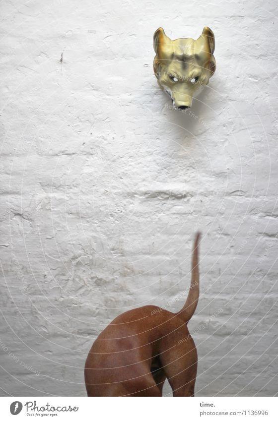 Kurioses | Peepshow Natur Hund nackt Tier Leben Wand Bewegung Mauer Zufriedenheit Perspektive Lebensfreude beobachten Neugier entdecken Maske Suche