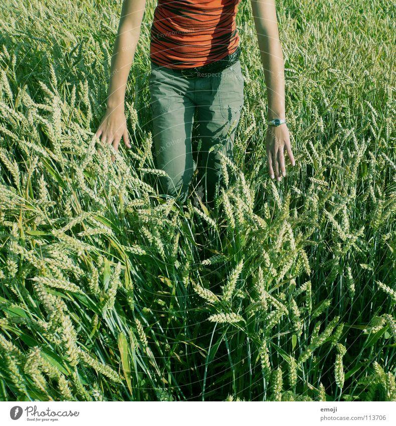 [im Grün] Feld Kornfeld Weizenfeld Frau schlechtes Wetter Frieden Fröhlichkeit Sommer Frühling Physik Zufriedenheit frei Hand Luft Mensch Konzentration stehen