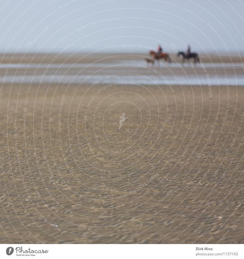 Nordseetour III Umwelt Natur Landschaft Tier Hund Pferd blau braun Wattenmeer Wattwandern Priel Schleswig-Holstein St. Peter-Ording Urlaubsort