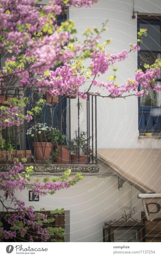 Albaicín Ferien & Urlaub & Reisen Städtereise Sonne Häusliches Leben Wohnung Haus Umwelt Klima Pflanze Baum Blume Einfamilienhaus Traumhaus Gebäude Architektur