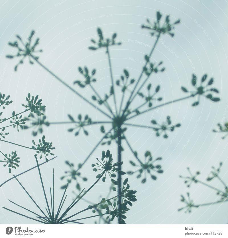BLÜTENSTERNCKEN III Himmel blau schön weiß Blume Wolken Winter Leben Blüte Herbst grau oben Zufriedenheit Dekoration & Verzierung Kraft Erfolg