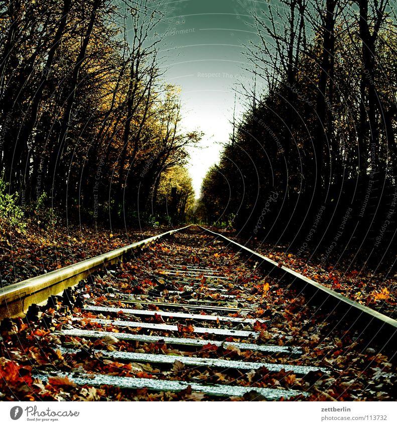 Ziel Gleise Schienenverkehr Eisenbahn Wald Nebenstrecke Horizont Fluchtpunkt Herbst Winter Verkehr Bahnhof schwelle schwellen puffpufpuff werkbahn vorortbahn