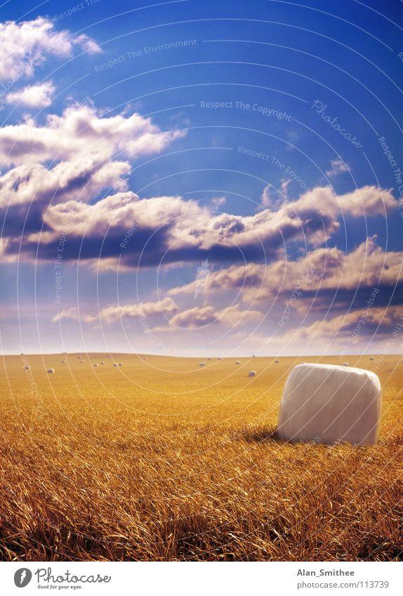 Golden Harvest Himmel harvest crop wheat grain bale hay sky gold clouds field