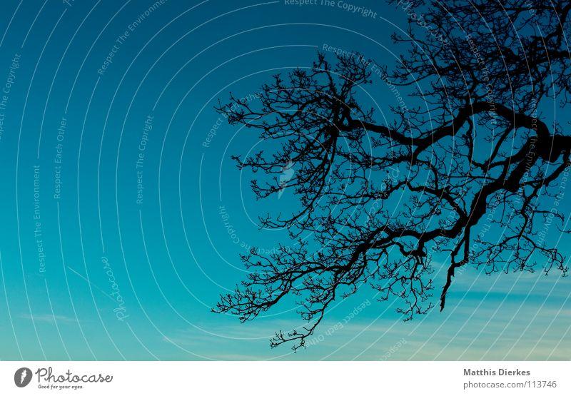 Geäst Himmel blau grün Baum Wolken Freude dunkel Traurigkeit Herbst Beleuchtung Hintergrundbild Tod Stimmung Horizont Regen Nebel