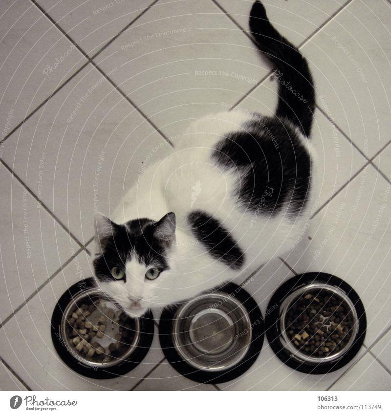 ALL YOU CAN EAT Katze weiß Tier Metall Ernährung Küche Fliesen u. Kacheln lecker Haustier Reihe böse Fressen Hauskatze Fleck Fleisch gefangen