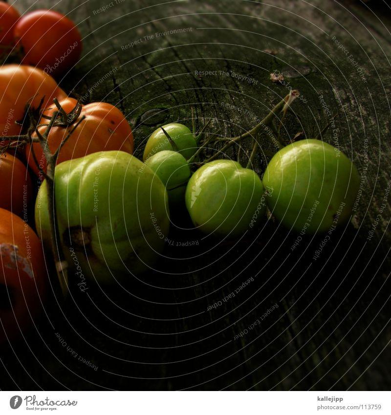 bei heinz grün Pflanze rot Holz Garten Arbeit & Erwerbstätigkeit Feld Frucht fliegen mehrere Ernährung Kochen & Garen & Backen Italien verfaulen Filmindustrie