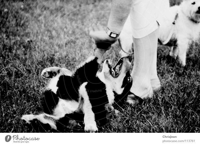 Bruno Hund Spielen Tier Wiese toben Pfote 2 Hand Finger Mischling Schuhe Vertrauen Aktion Freude Schwarzweißfoto Säugetier Besitzer liegen Hundehalter Beine