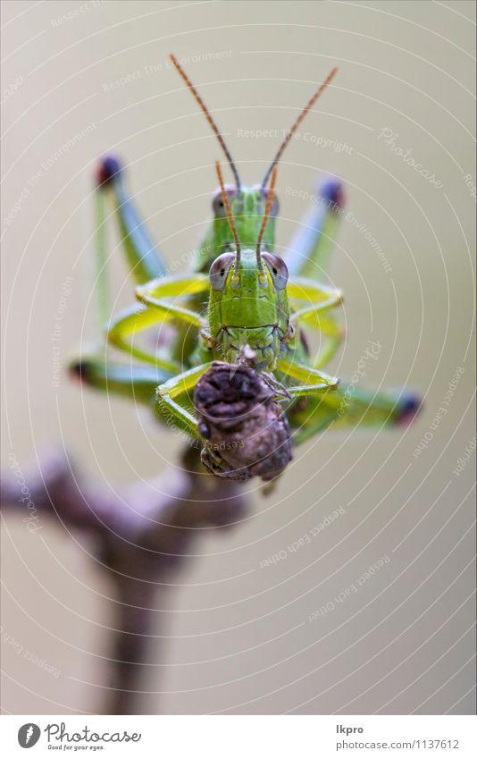 Natur Pflanze grün Farbe weiß rot schwarz Liebe grau Linie braun Sex Italien Insekt Pfote Geradflügler