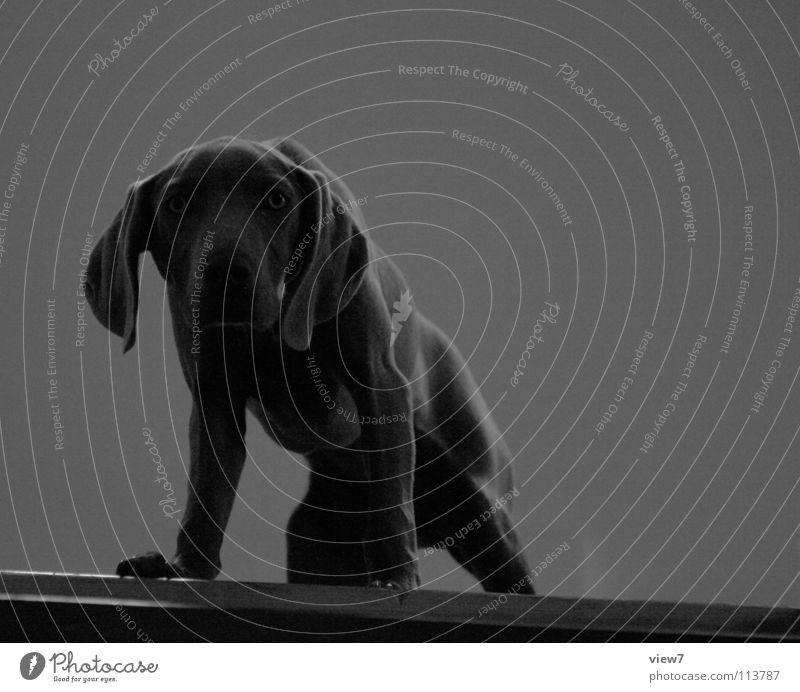 seh dich. dunkel grau Hund klein braun Treppe Perspektive Körperhaltung niedlich Neugier Fell Wachsamkeit Geruch Kontrolle Haustier Säugetier